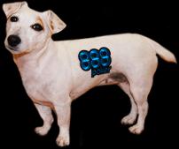 888 dog pic