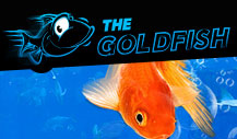 The Goldfish