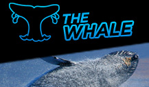 The $200,000 GTD Whale tournament