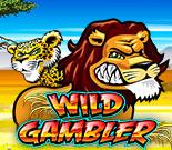 wild gambler 888 casino