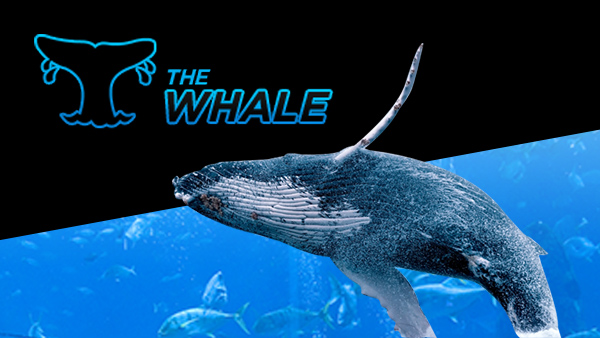 888poker the whale