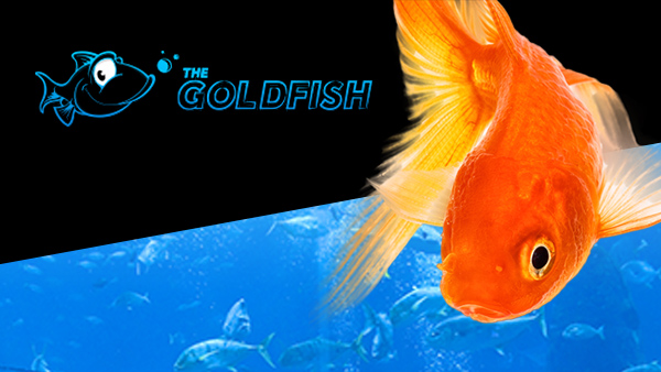 Poker goldfish